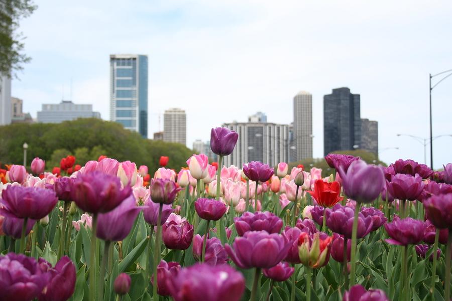PHOTOS Springtime in Chicago