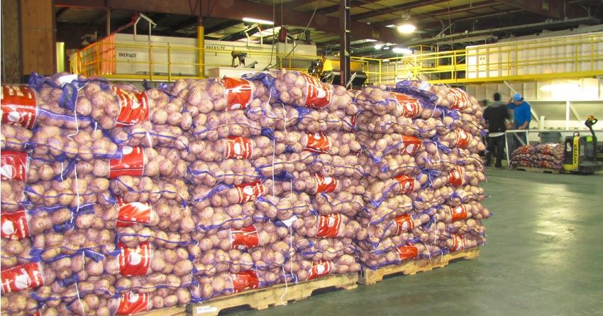 Pallets of chipping potatoes waiting to be loaded on to trucks at Gold Dust Potato Processors in Malin, Oregon.