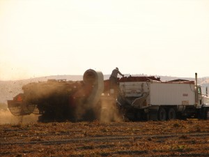 Closer shot of potato bulker at work