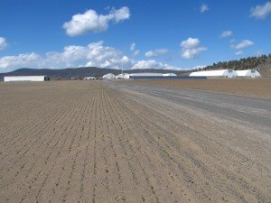 Empty driveway at Gold Dust's potato packing shed in Malin, Oregon