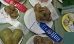 Freaky potato at 2011 Klamath Basin Potato Festival