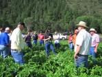 Gold Dust agronomist Daniel Jepsen educates guests about the chipping potato crop.