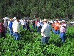 John Walker discusses the chipping potato crop with guests in a potato field.
