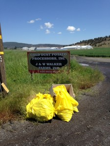 Yellow garbage bags from Gold Dust's litter pick up along Micka Road in front of Gold Dust Potato Processors' sign in Malin, Oregon.