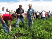 Daniel Jepsen, agronomist, digging up potatoes during the field tour of Gold Dust's 2014 Open House Field Day.