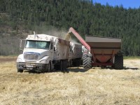 A grain cart loads wheat into grain trucks on the Running Y Ranch, outside of Klamath Falls, Oregon.