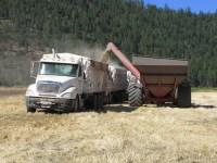 A grain cart loads wheat into grain trucks on the Running Y Ranch, outside of Klamath Falls, Oregon.
