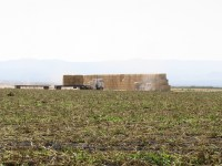A hay squeeze and truck move wheat straw bails on the Tule Lake National Wildlife Refuge.