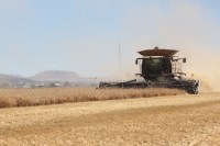 Walker Brothers' Claas Lexion 740 cutting organic rye near Malin, Oregon.