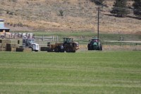 Gold Dust's hay crew gather several tons of hay in one spot to load from an alfalfa field near Malin, OR.