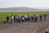 Gold Dust's guests gather in a field at the Running Y Ranch to see chipping potatoes during the 15th Annual Open House Field Day.