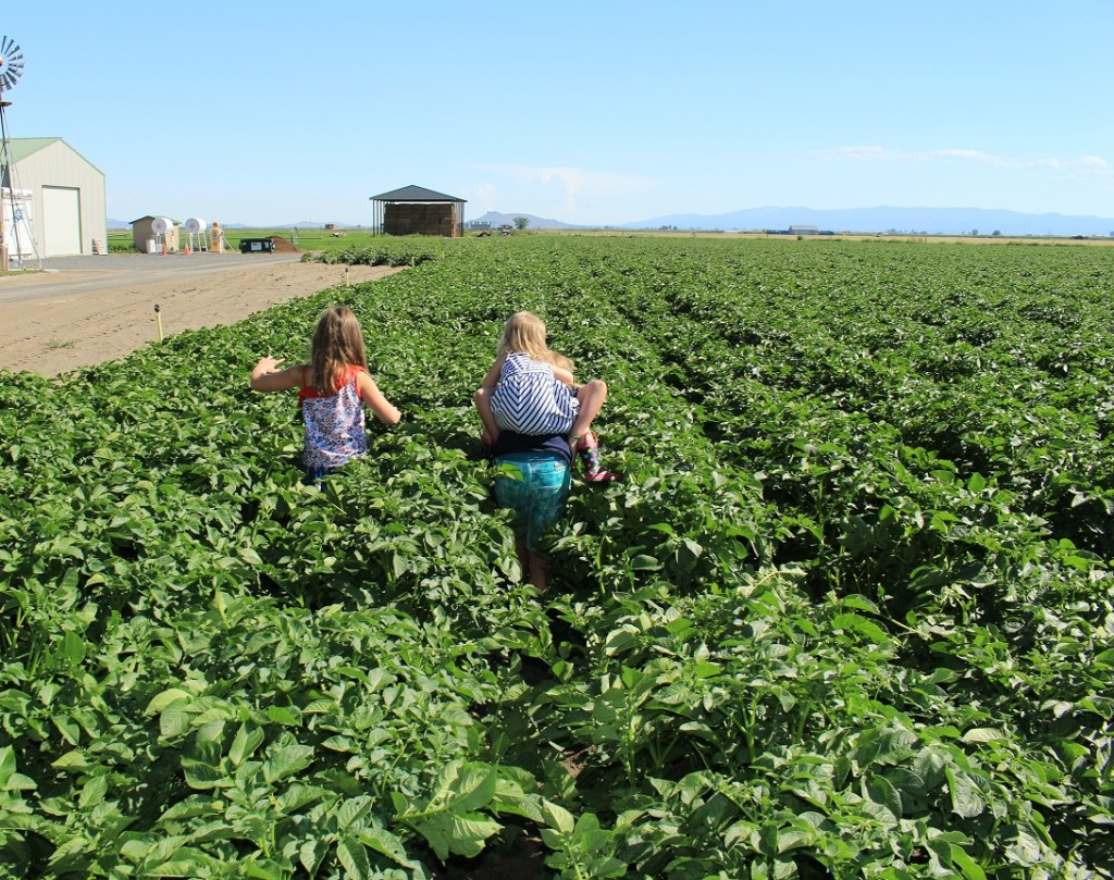 Mari and Rory Hill with Madison Walker on piggy back running through a chipping potato field outside of Malin, Oregon.