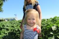 Madison Walker in a potato field outside of Malin, OR.