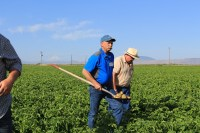 Matt Huffman, MD Huffman Farms, walks out of a potato field with samples of Lamoka chippers near Newell, CA.