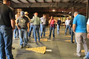 Guests look at samples of chiping potatoes laid out on the floor at Gold Dust's 16th Annual Open House Field Day.