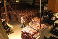 Chipping potatoes on pallets getting prepared to be shipped from Gold Dust Potato Processors in Malin, OR.