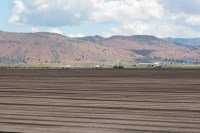 A chipping potato seed farm outside of Worden, Oregon, near the Oregon California Border