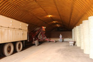 A spud truck full of chipping potato seed being unloaded into a cellar on Gold Dust Potato Processors' Malin, Oregon campus.