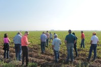 Gold Dust and Walker Farms' guests visiting Staunton Farms' field of 2137 chipping potatoes near Tulelake, California.