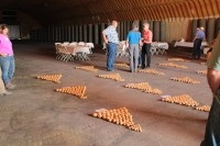 Sample of chipping potatoes grown by Walker Farms are laid on the floor of Cellar 1 on Gold Dust's Malin campus at the 2017 Open House Field Day.