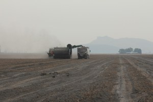 Walker Farms potato bulker and spud truck in a field near Newell, California.