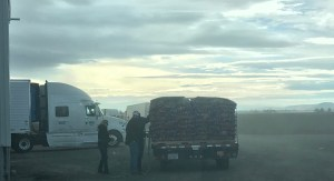 Gold Dust Potato Processors employee Suzanne Wallace helping load a truck with donated chipping potatoes.