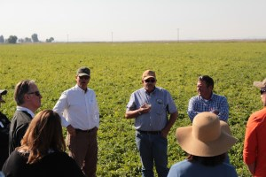 Sid Staunton, John Walker and Luke Robison discussing chipping potatoes in a potato field outside of Tulelake, CA.
