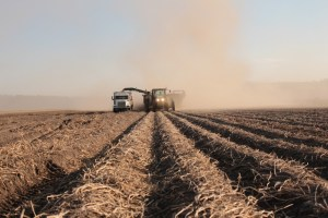A potato harvester fills a spud truck with chipping potato seed on the Caledonia Farm near Klamath Falls, Oregon.