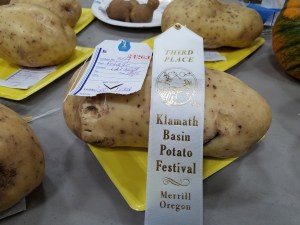 Leo Pena's chipping potato took home third place in the Largest Potato contest at the 2018 Klamath Basin Potato Festival.