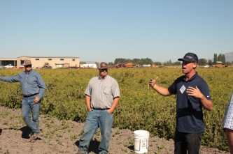 Marshall Staunton, Eddie Staunton and Marc Staunton in a potato field near Tulelake, California.