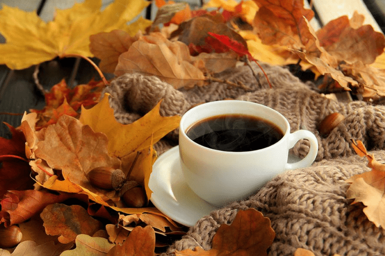 Fall Season Desktop Wallpaper 7 Best Fall K Cups You Can Buy On Amazon Right Now Gold