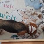 Golden-Daylight-Beagle P-Wurf 2. Woche 05