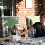 Golden-Daylight-Beagle P-Wurf 4. Woche 17