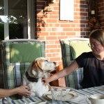 Golden-Daylight-Beagle P-Wurf 4. Woche 18