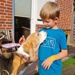 Golden-Daylight-Beagle P-Wurf Woche 25