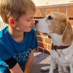 Golden-Daylight-Beagle P-Wurf Woche 26