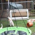 Golden Daylight Beagle P-Wurf 7. Woche 15