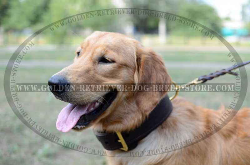 leather golden retriever collar