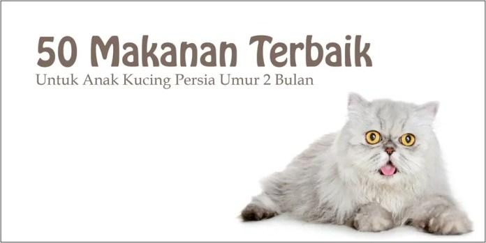 50 Makanan Terbaik Untuk Anak Kucing Persia Umur 2 Bulan Goldenmaze