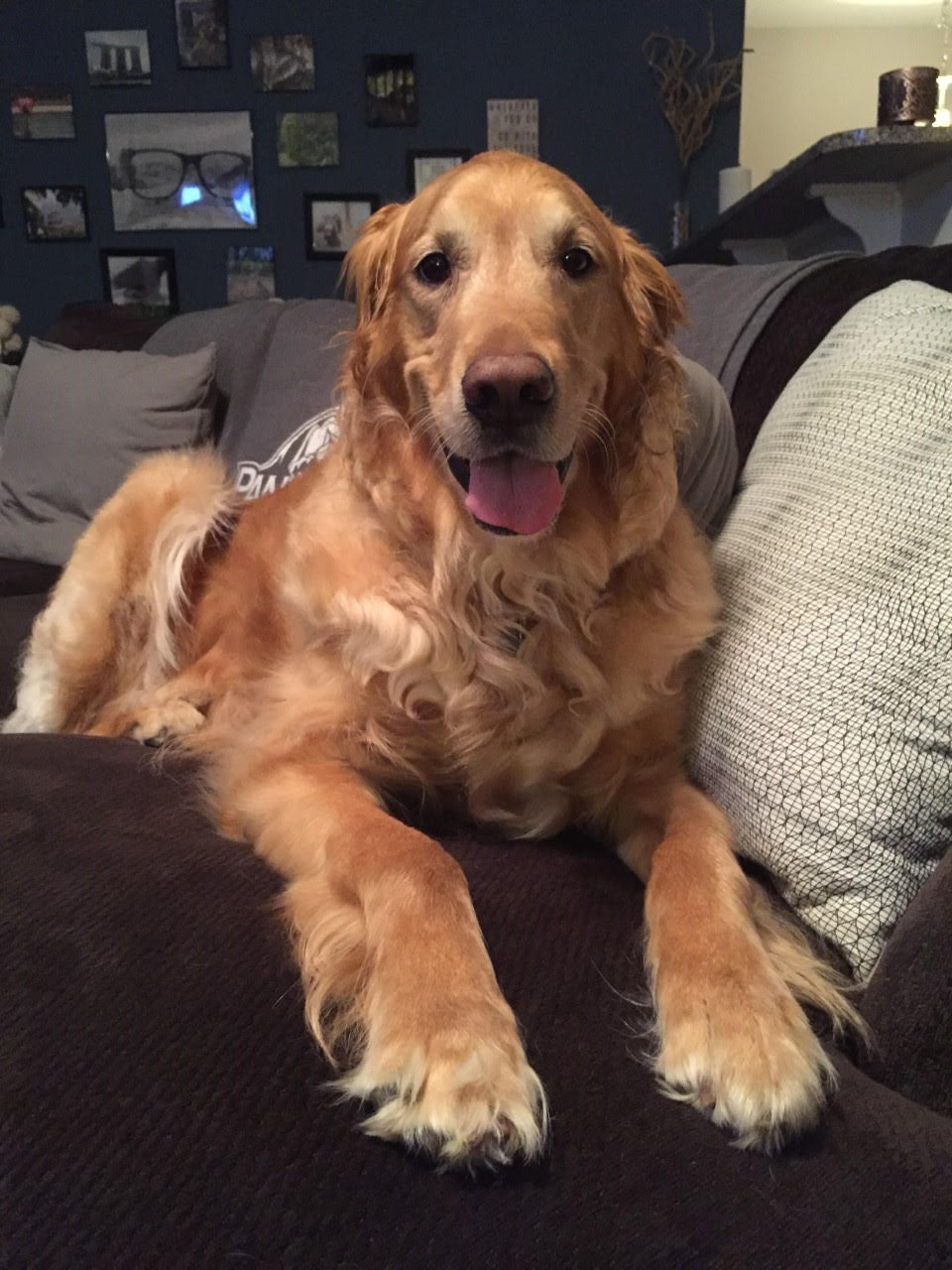 Maggie May has been adopted! 5 yrs.Neuss River GRR, NC