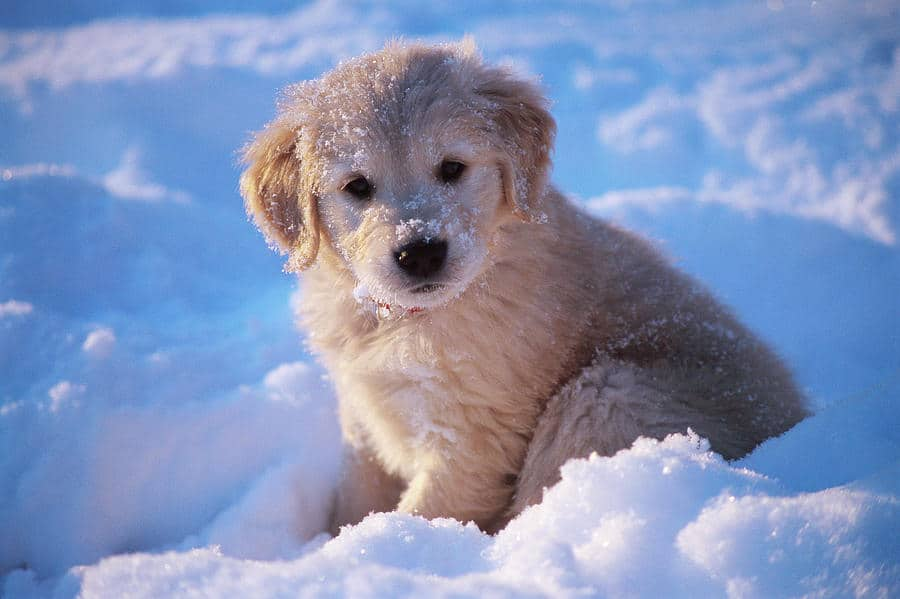 Cold Weather Tips for Pets