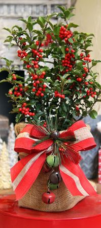 """22"""" table-top Holly Tree"""