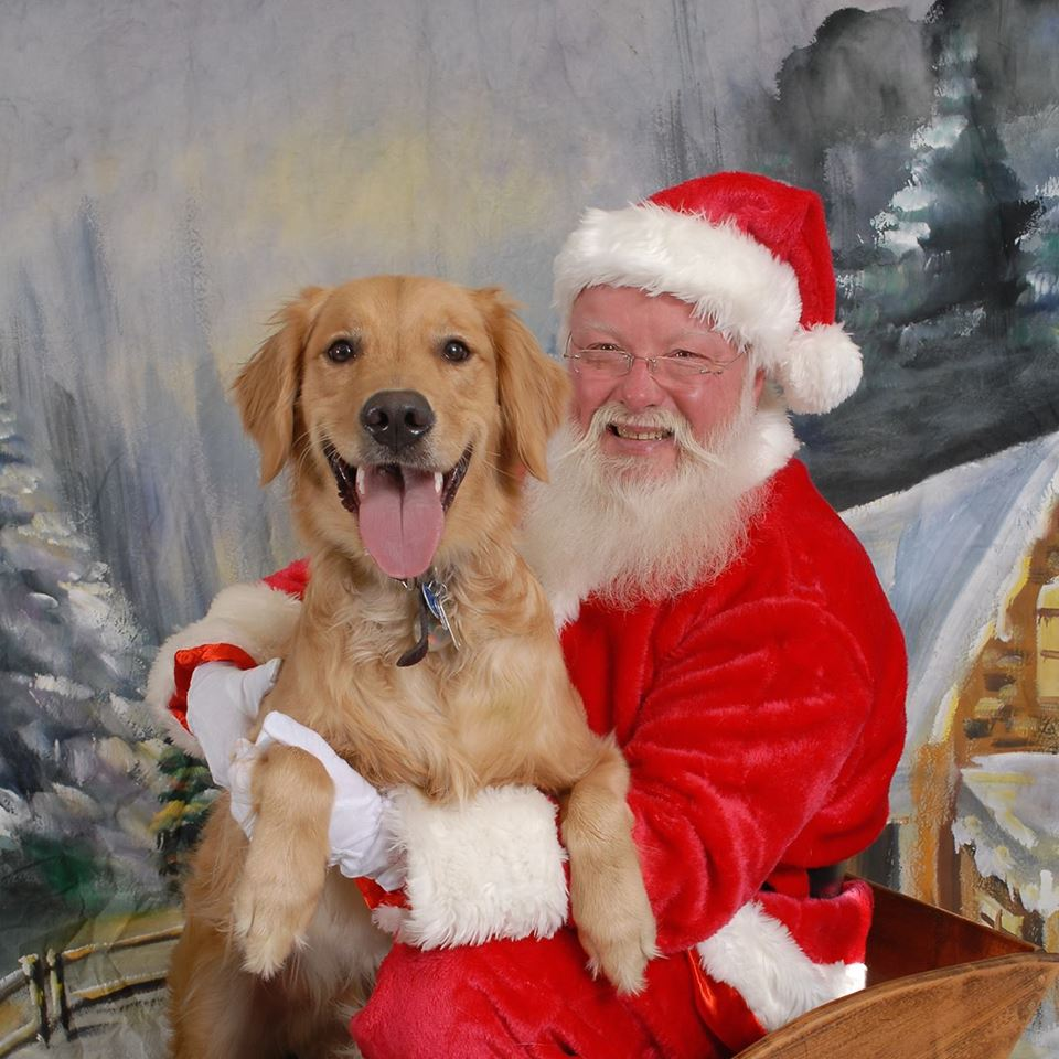 golden-retriever-santa