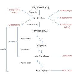 carotenoid biosynthesis [ 1036 x 899 Pixel ]