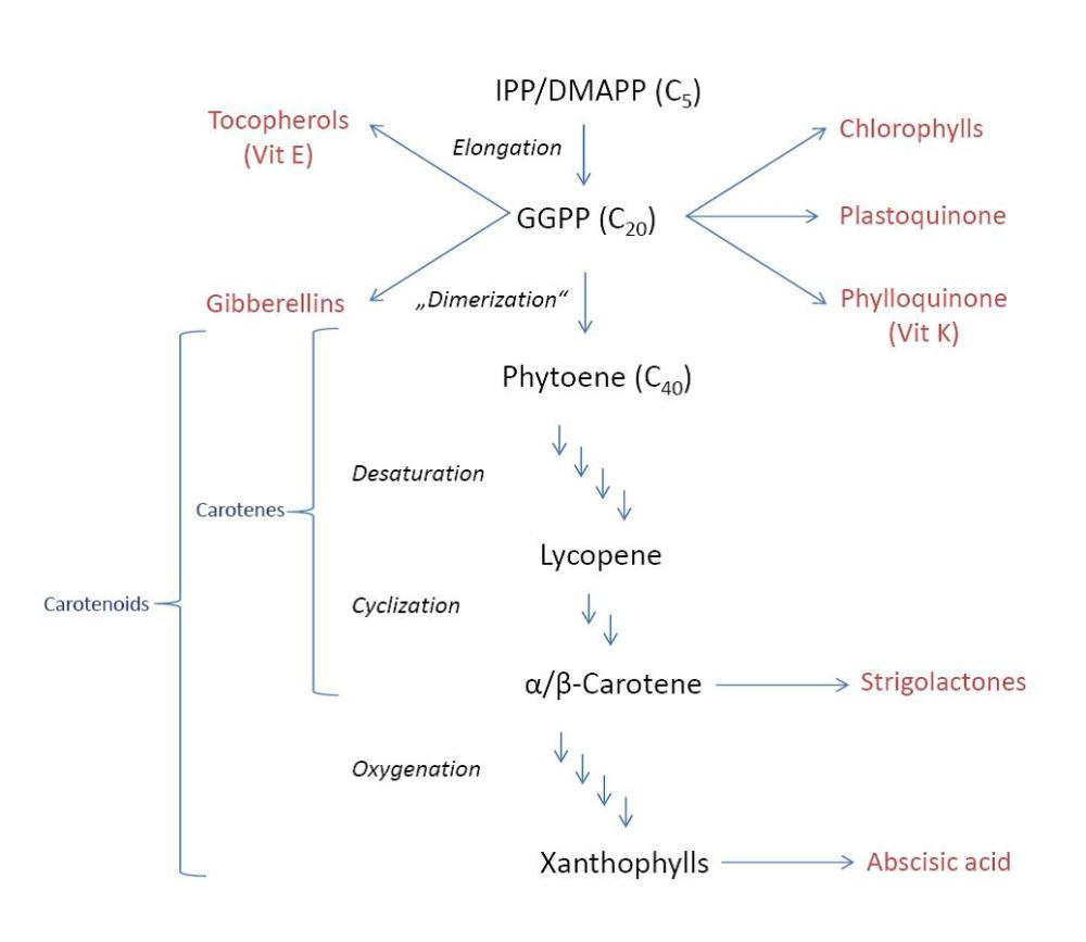 medium resolution of carotenoid biosynthesis
