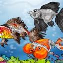 types of fancy goldfish