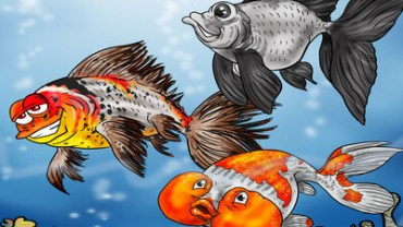 Fancy Goldfish, Which One Is Right For You?