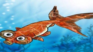 Celestial Eуе Goldfish – Bug Eyed Goldfish