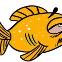 goldfish ich