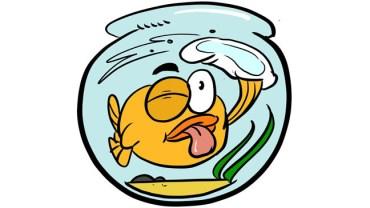 clean a fish tank